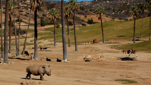 Rhino_san_diego_wild_animal_park